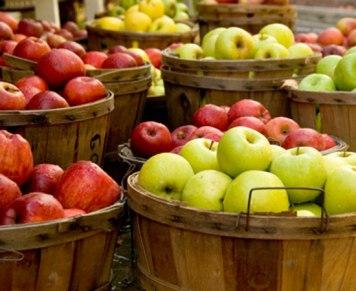 apple-picking-westchester